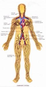 Сантинел биопсия. Лимфатическая система человека