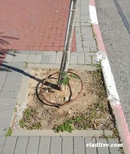 Полив деревьев в Израиле