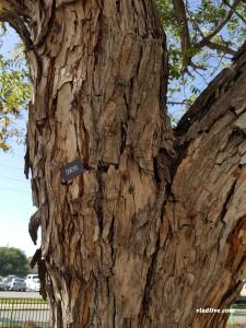Деревья в Израиле