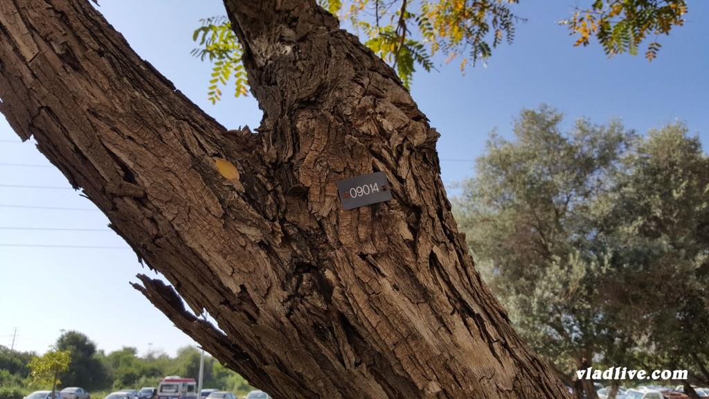 Древья в Израиле