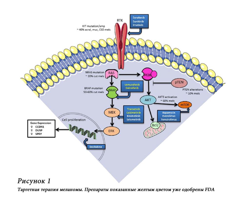 Меланома. Мутации и таргетные препараты