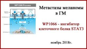 WP1066 новый препарат для лечения метастазов меланомы в ГМ