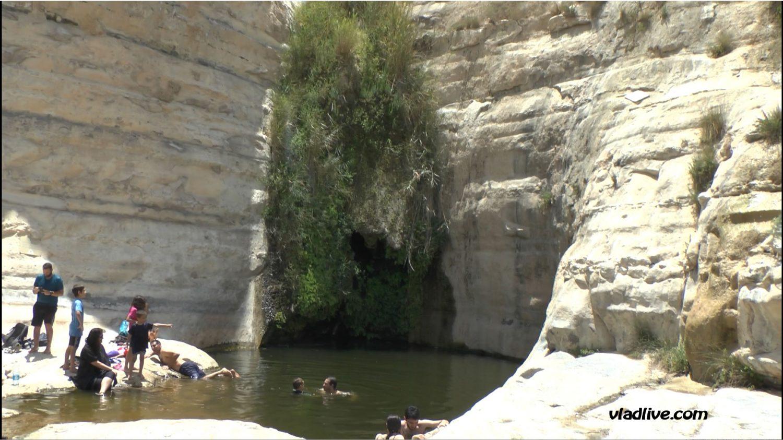 Оазис в пустыне Негев